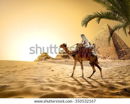 Camel near pyramids in hot desert of Egypt - stock photo