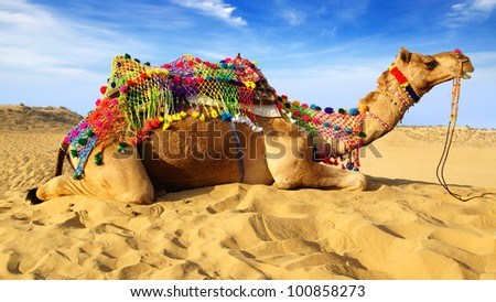 Camel on the background of the blue sky. Bikaner, India - stock photo