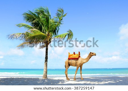 Camel on the beach coast with palm - stock photo