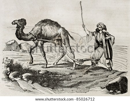 Camel plowing in Lebanon, old illustration. By unidentified author, published on Magasin Pittoresque, Paris, 1840 - stock photo
