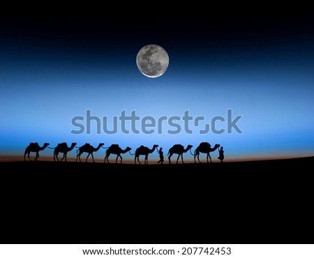 camels in the morning. - stock photo