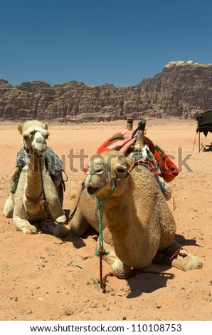 Camels in Wadi Rum, the desert valley made famous by TE Lawrence. Its Arabic meaning is lunar valley - stock photo