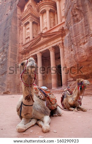 Camels, or rather dromedaries (Camelus dromedarius), waiting for tourists at Al Khazneh (the treasury).  Focus on the whiskers. Petra, Jordan. Probably built 2nd-3d Century AD. - stock photo