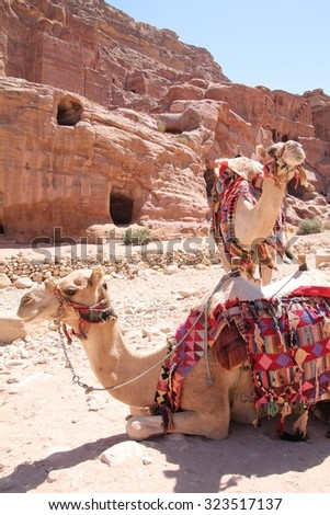 Camels wait inside Petra - stock photo