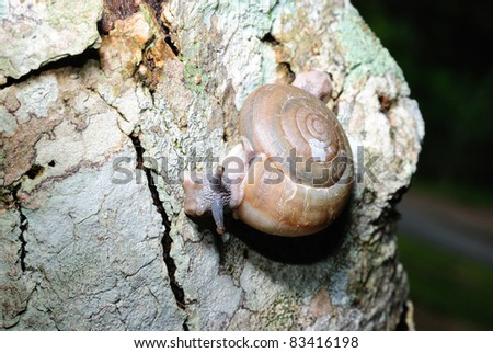camera image of a snail in foreground - stock photo