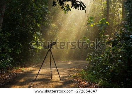 Camera with tripod in rainforest - stock photo