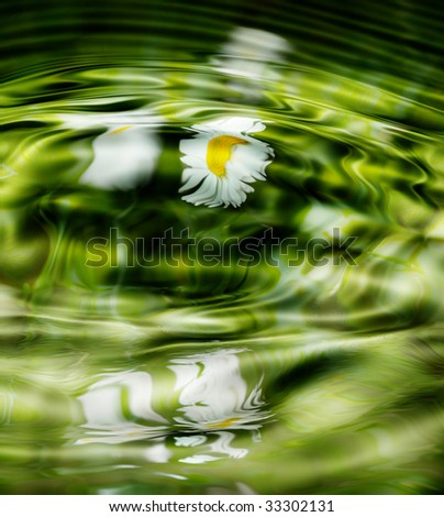 Camomiles in grass reflection in the pond - stock photo