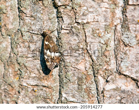 Camouflage of a butterfly on the bark of a tree - stock photo