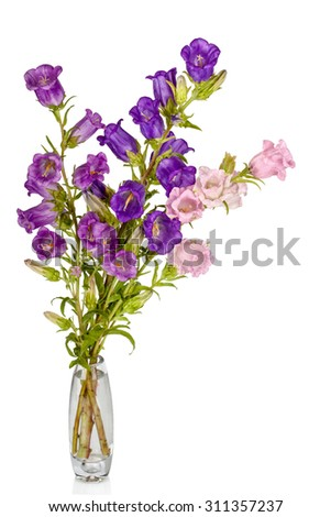 Campanula Flowers. Beautiful  hand-bell in vase isolated on white - stock photo