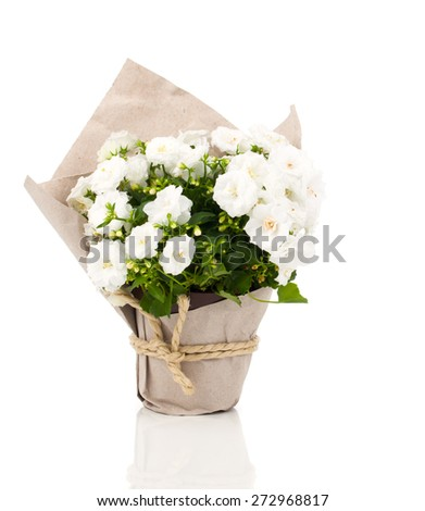 Campanula terry flowers in paper packaging, isolated on white background - stock photo