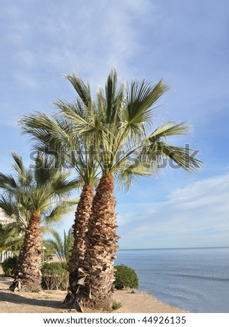 Campello Spain Tropical Palm trees under mediterranean blue sky - stock photo