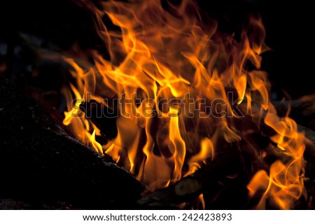 Campfire in forest at evening. Close-up view. - stock photo