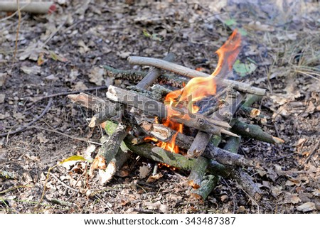 Campfire in the wood - stock photo