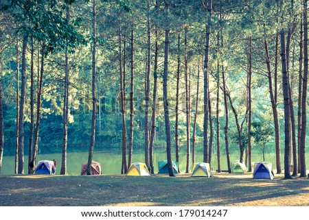 Camping and tent under the pine forest.Vintage color style. - stock photo