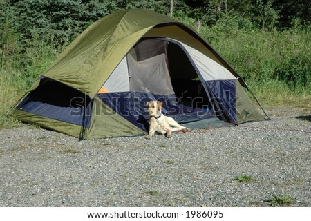 Camping with the dog - stock photo