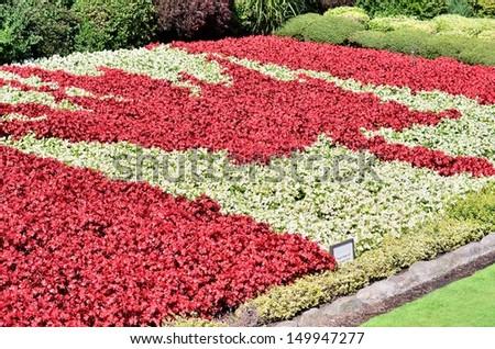 Canada flag flower garden - stock photo