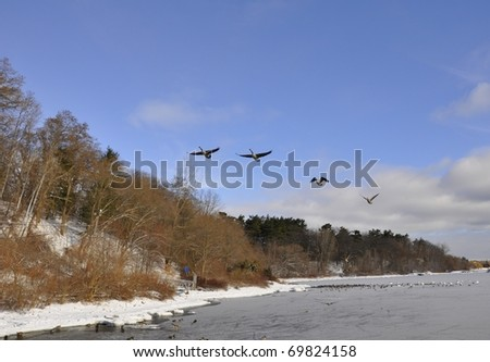 Canada geese flying along the shore of Lake Ontario - stock photo