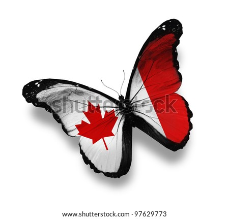Canadian flag butterfly, isolated on white - stock photo