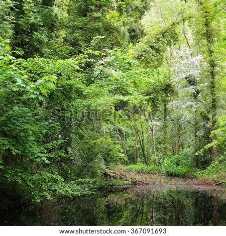 Canal in Stochemhoeve forest park in the Netherlands - stock photo