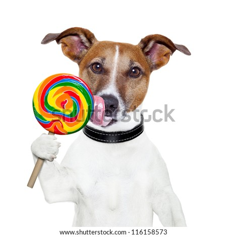 candy lollipop  licking  dog - stock photo