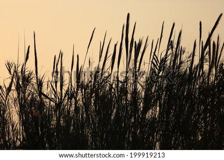 Cane background - stock photo