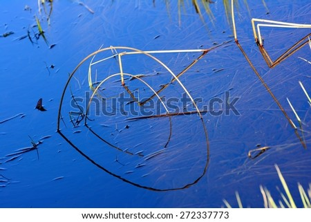 cane reflected in water - stock photo