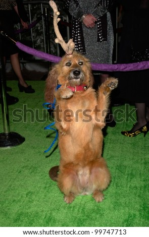 Canine actor KELLY at the world premiere, at Universal City, of his new movie Dr. Seuss' How The Grinch Stole Christmas. He plays the Grinch's faithful dog Max. 08NOV2000.   Paul Smith / Featureflash - stock photo