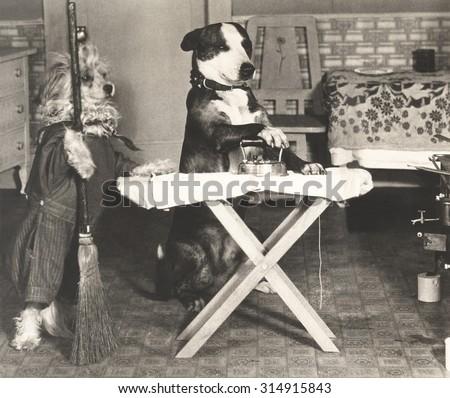 Canine chores - stock photo