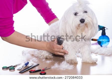 Canine hair court. - stock photo