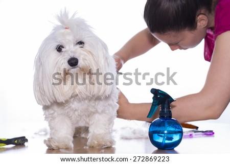 Canine hair court - stock photo