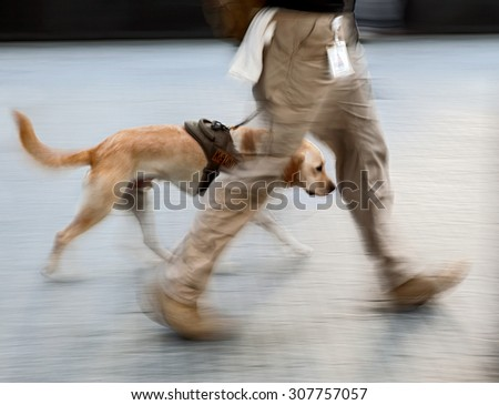 canine service dog on a city street intentional blur - stock photo