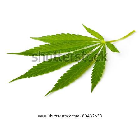 Cannabis leaf - stock photo