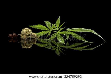 Cannabis leaves, bud and hashish isolated on black background. Alternative medicine. - stock photo
