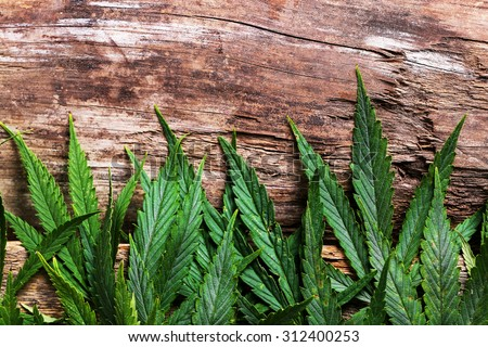 Cannabis on a wooden background - stock photo