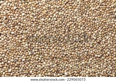 Cannabis seed, Hemp seed - stock photo