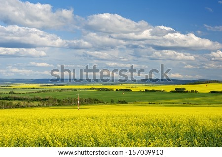 Canola field in bloom in British Columbia Peace River District - stock photo