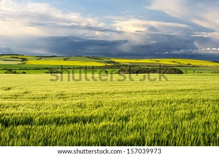 Canola field in bloom with storm on the horizon - stock photo