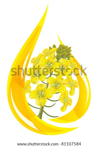 Canola oil. Stylized drop of oil and rapeseed flower. - stock photo