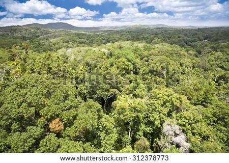 Canopy of Daintree Rainforest in Queensland, Australia - stock photo