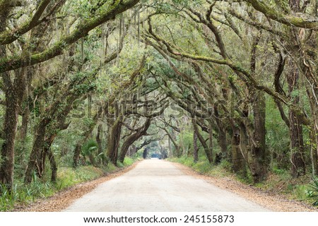 Canopy of trees and hanging moss over the dirt road entrance to Botany Bay Wildlife Management area near Charleston, South Carolina. - stock photo