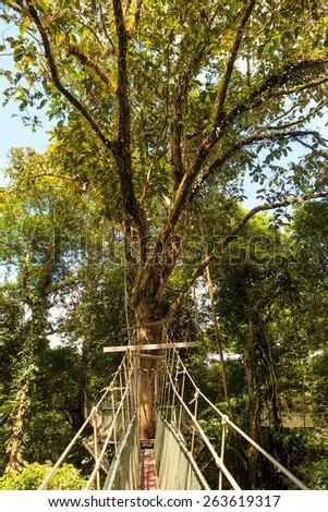 Canopy walk at gunung mulu national park - stock photo