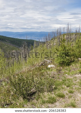 Canyon in Burned Out Forest Area - stock photo