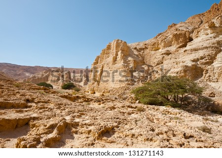 Canyon in the Judean Desert on the West Bank - stock photo