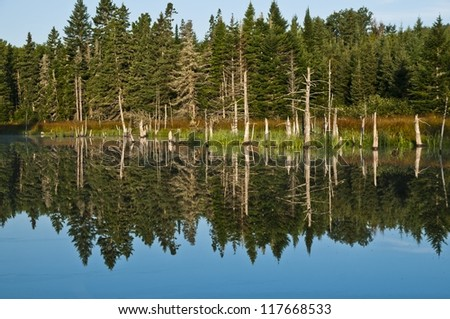 Cape breton forest reflected by morning sun and still water zoomed view - stock photo