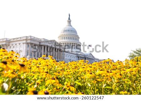 Capitol building Washington DC yellow daisy flowers USA congress turf meadow US - stock photo
