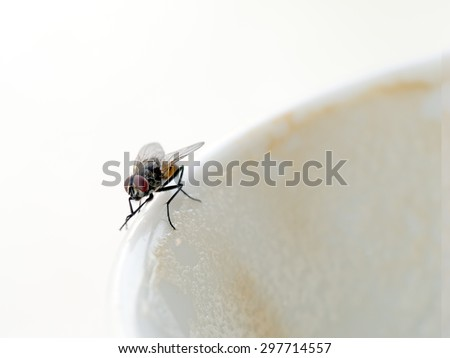 Cappuccino coffee shared with fly, rubbing its feet together. Lovely! Disease risk etc. - stock photo