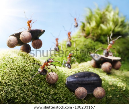 car crash at ants races, ant tales - stock photo