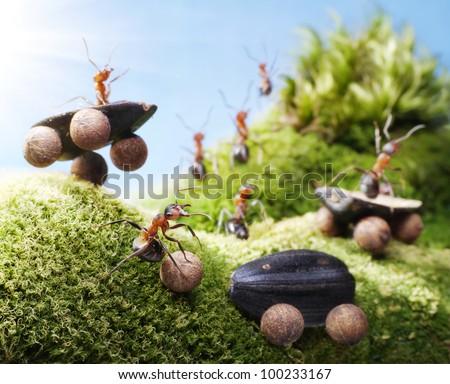 car crash at ants races, ant tales - stock photo