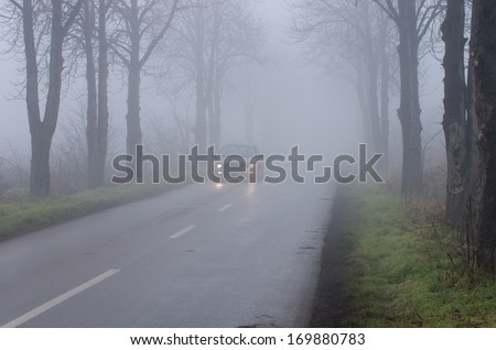 Car drives on rural road with tree alley on thick fog - stock photo