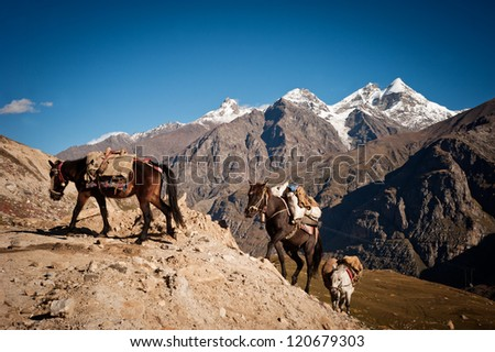 caravan of horses with cargo overcomes mountains. Border of Pakistan and India - stock photo